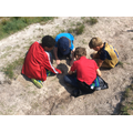 We investigated the soil.