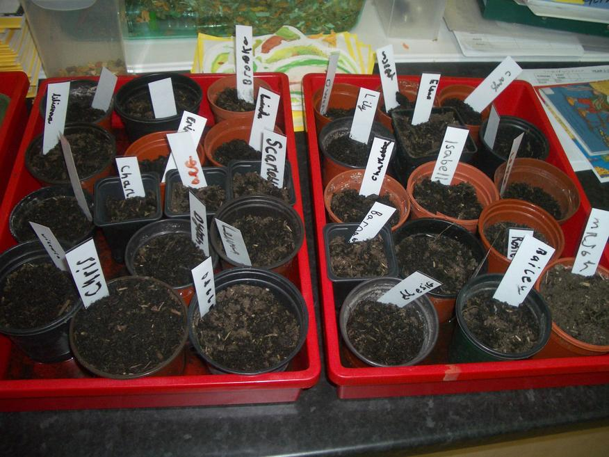Our seed planting for the garden.