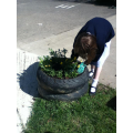 Adding flowers and compost.