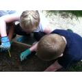 Dibbing holes to plant more leeks.