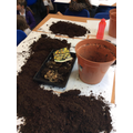 Plotting our plants.