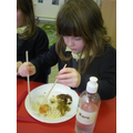 We loved the chinese food and mastered chopsticks.