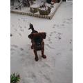 Ollie enjoying the snow