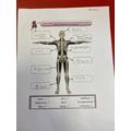 Korban - Skeleton Science
