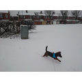 Ollie enjoying the snow!