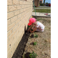 Millie's Gardening project