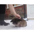 Rebecca's rabbit - snow fun!