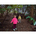 Walks through the forest