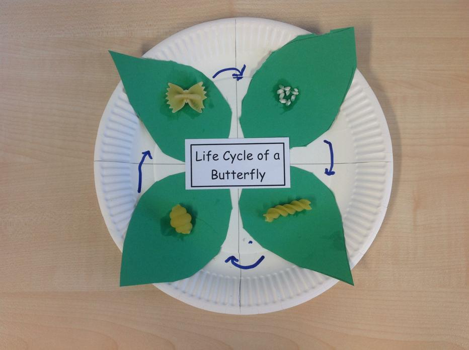 pasta life cycle of a butterfly