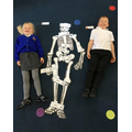 We practiced out knowledge about parts of the body by labelling our skeleton