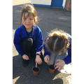 We planted our own seeds as part of our learning about plants in Science.