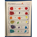 We looked at how to mix a primary colour with a secondary colour to make tertiary colours