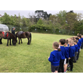 Somerset Day - We had a special visit from 2 Exmoor ponies