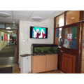 Fish Tank and Display Television