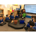 Learning about plants and growing.
