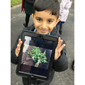 We went on a plant hunt in Science.