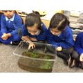 Wow! Look at those tadpoles!
