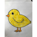 Drawing and colouring an Easter chick