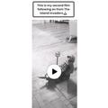 Leon homemade video