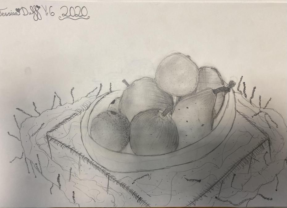 Still Life Sketches
