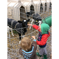 The baby calves wear coats to keep them warm
