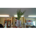 Look how much our bulbs have grown!