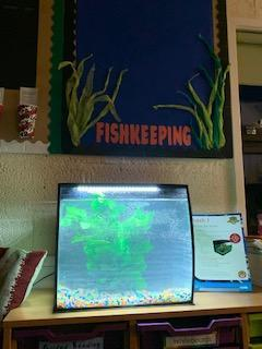 Here is our aquarium! All set up but no fish yet.