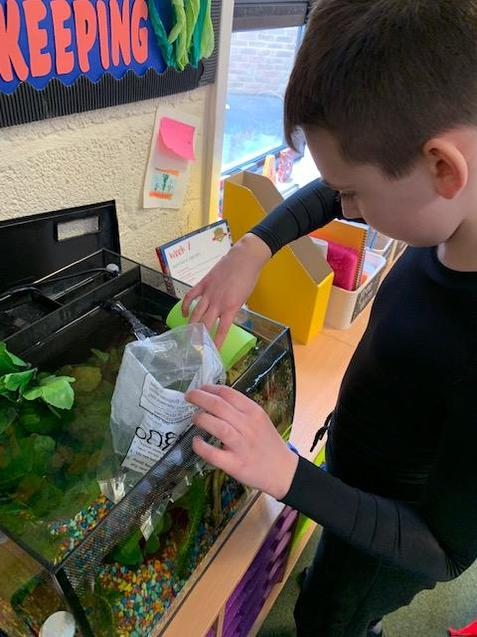 William was chosen to add the fish to the tank.