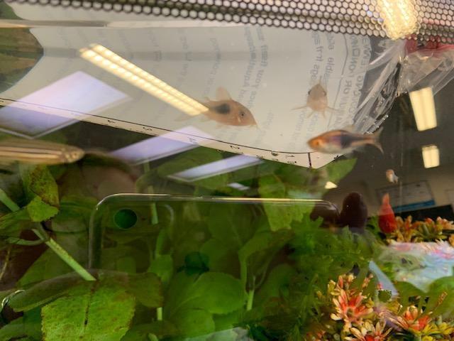 New fish!!