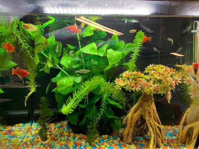 They seem to be enjoying life in our aquarium!