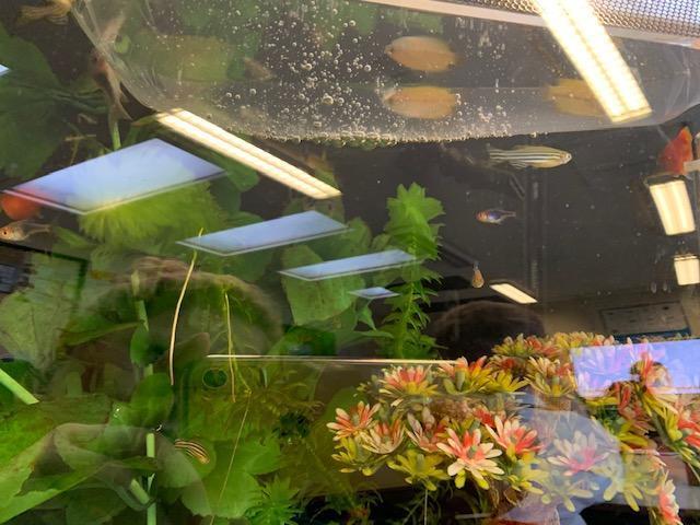 We get three of them for our aquarium.