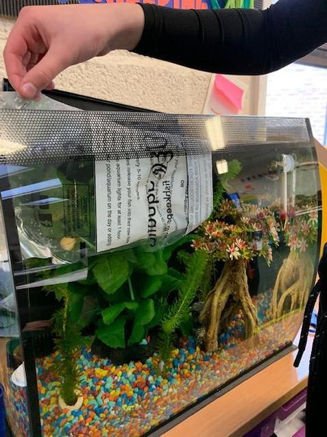 He carefully released them into the aquarium.