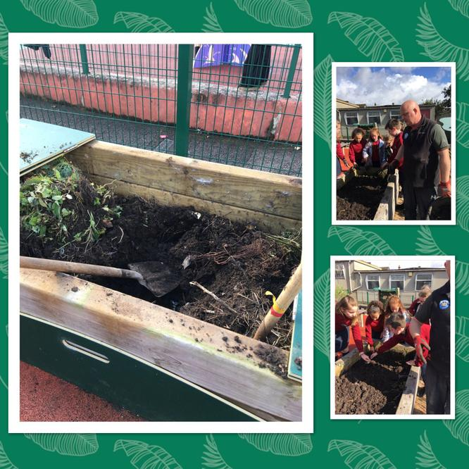 Year 6 used compost from the composter.