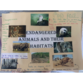 Amelia's endangered animals poster