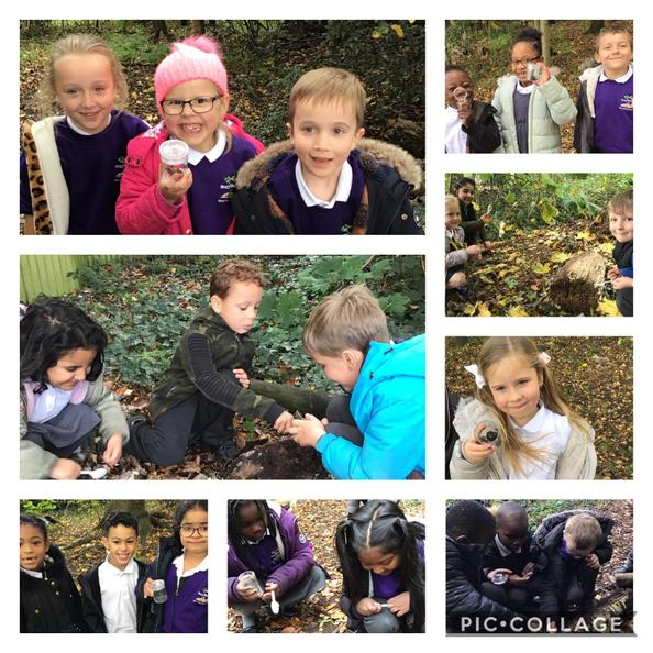 We went on a mini beast hunt in the woodland and identified different creatures there.
