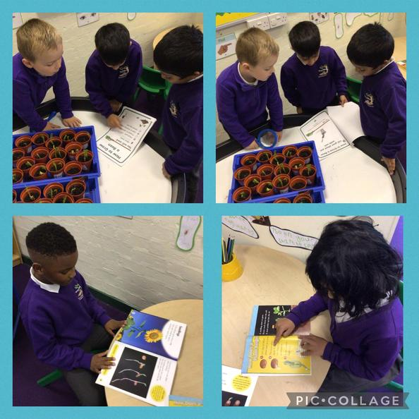 They used non-fiction books to find out more information about their beans.