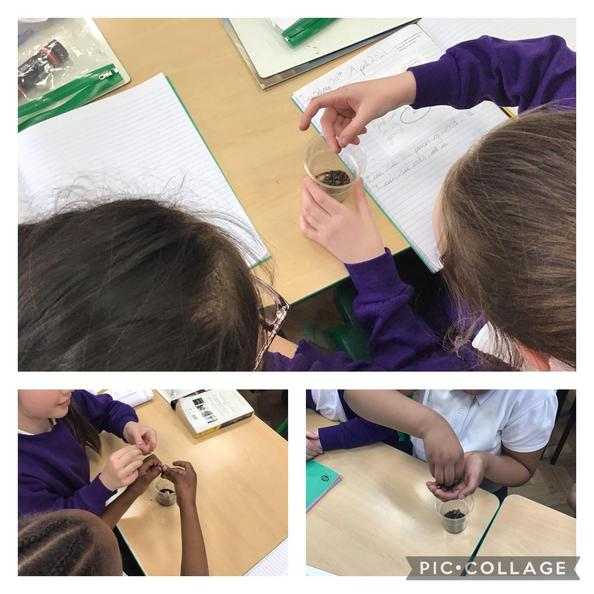 We have been finding out the properties of soil this week!