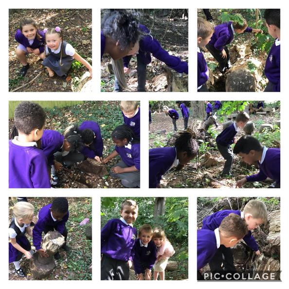 We visited the woodland habitat at school and searched for different microhabitats.