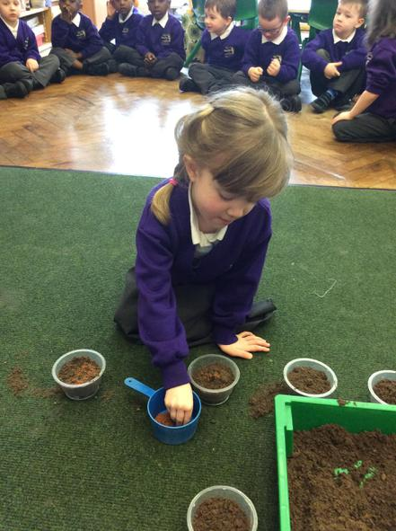 Planting our cress