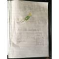 Oscar has written about his new bird 'Boris'