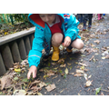 Year 1 exploring Autumn leaves