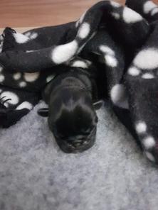 A new puppy!