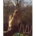 Molly the Tawny Owl
