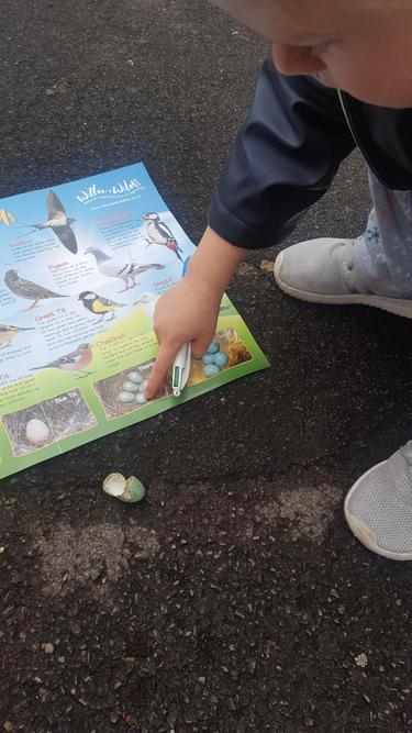 Learning using about bird's nests and eggs