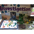 Investigation Area