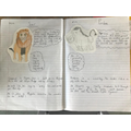 Toby's animal profiles from the Lion King