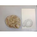 Fossil fine art