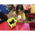 Science - Which materials will seeds grow in?