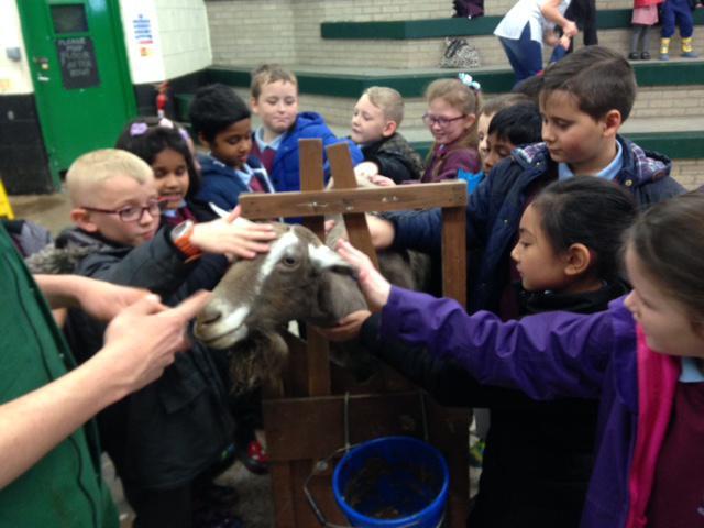 Patting Bramble the goat