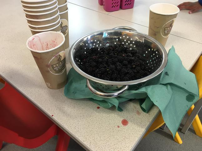 Wow, look at our batch of blackberries!